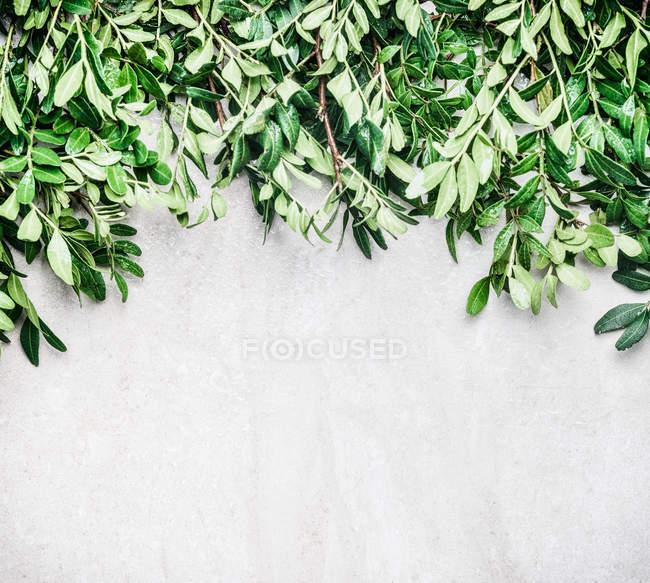 Frame-Zusammensetzung der exotischen Blätter — Stockfoto