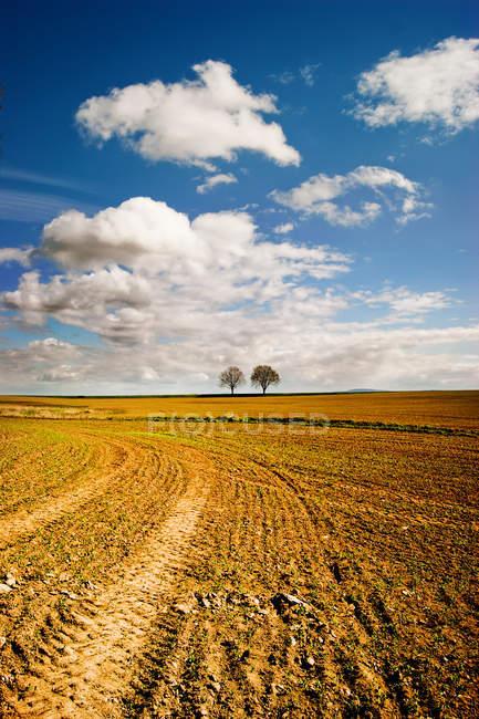 Campo di grano e alberi sull'orizzonte — Foto stock