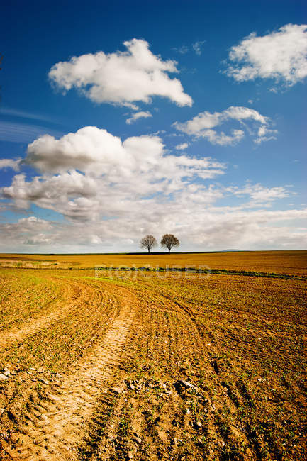 Wheat field and trees on horizon — Stock Photo