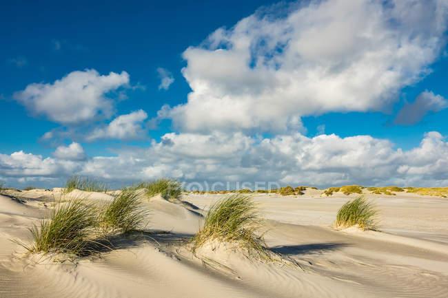 Песчаный пляж с кустов трава — стоковое фото