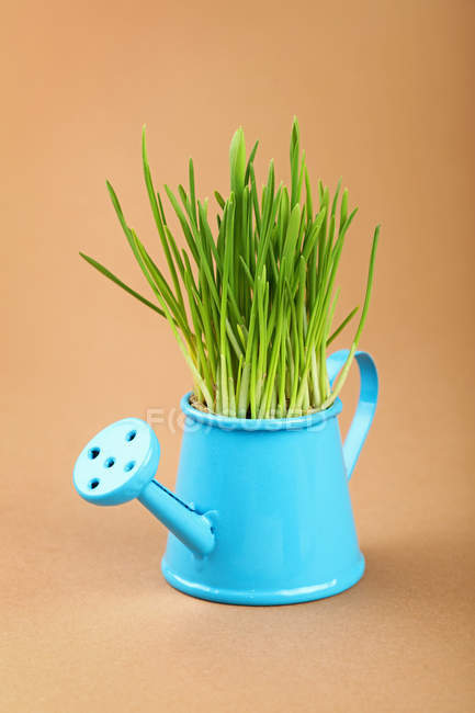 Grass growing in blue watering pot — Stock Photo