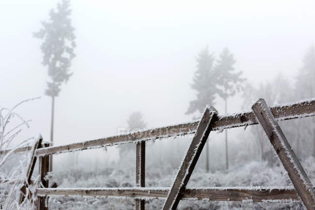 Trees and frost on fence in foggy weather — Stock Photo