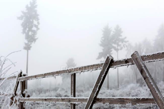 Alberi e gelo sul recinto in tempo nebbioso — Foto stock