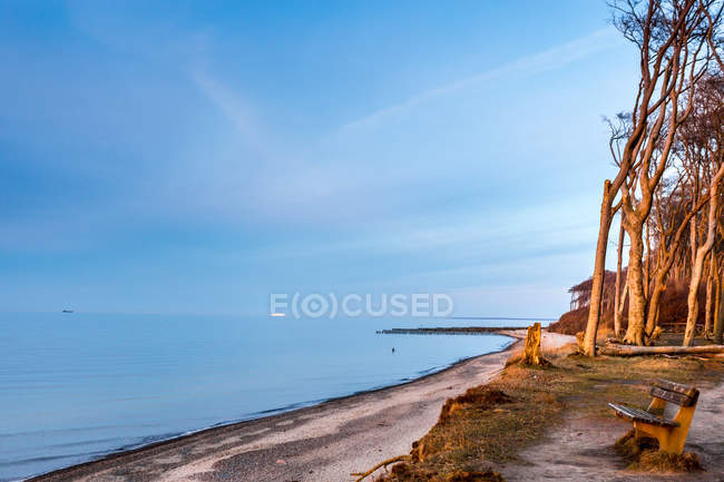 Bench on the coast with trees — Stock Photo