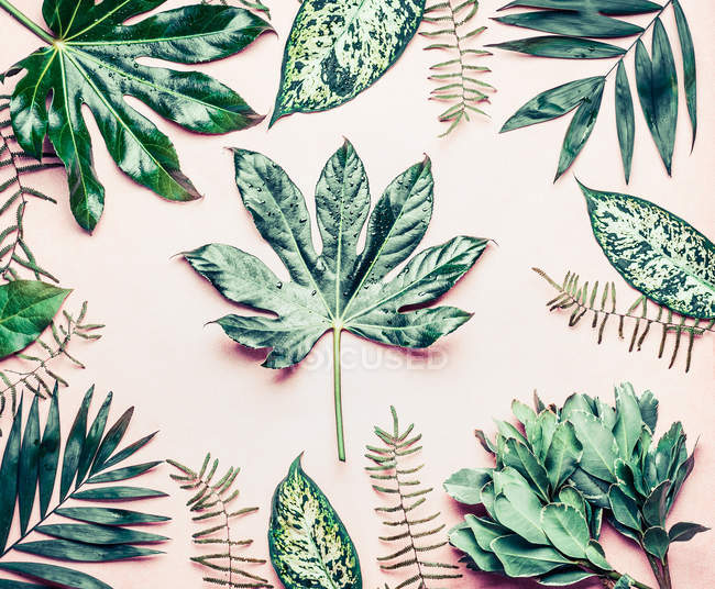 Composition of exotic leaves — Stock Photo