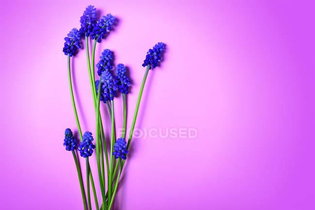 Fleurs de printemps bleu rose — Photo de stock