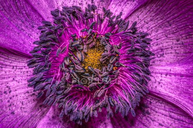 Крупным планом вид богато цветок цветок — стоковое фото