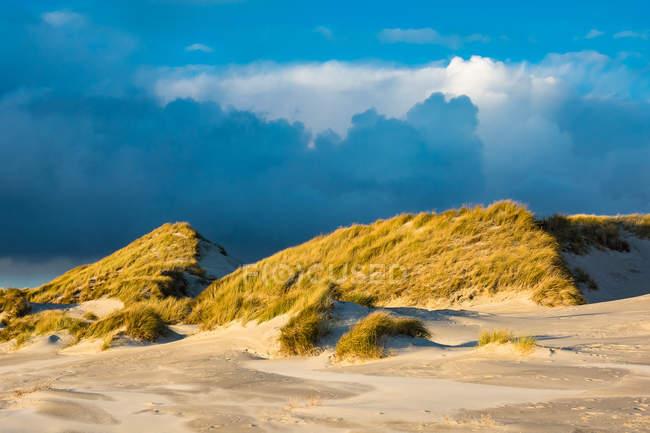 Трава растет на песчаном пляже — стоковое фото