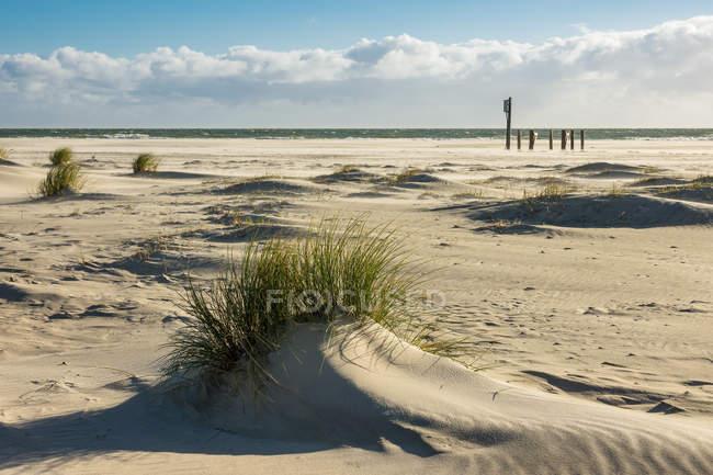 Seascape com grama na praia — Fotografia de Stock