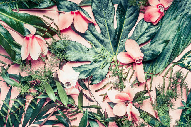 Blossoming exotic flowers — Stock Photo