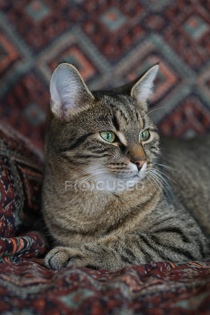 Cat sitting on patterned blanket — Stock Photo