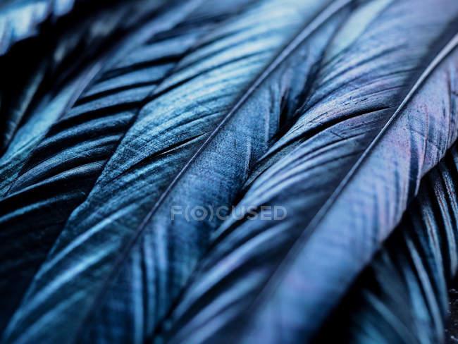 Синяя птица перья — стоковое фото