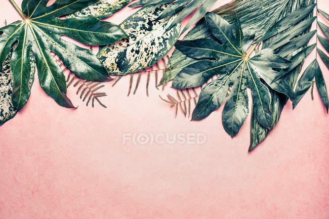Composición de hojas tropicales - foto de stock