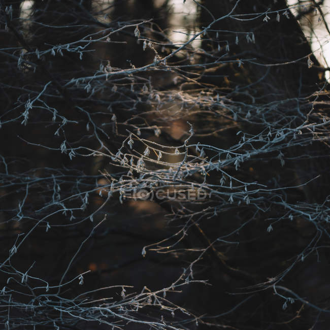 Ветви деревьев лес — стоковое фото