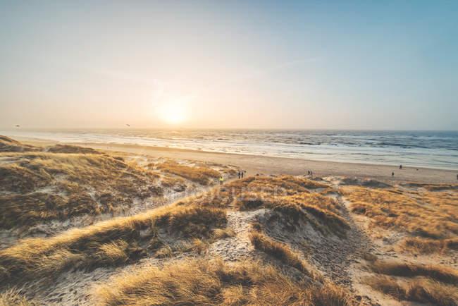 Grama seca no Prado da costa — Fotografia de Stock