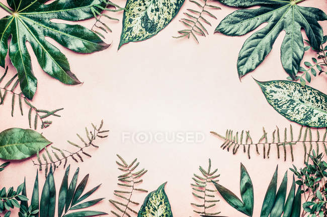 Exotic tropical tree leaves — Stock Photo