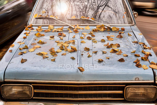 Closeup of retro car with autumnal leaves on hood — Stock Photo