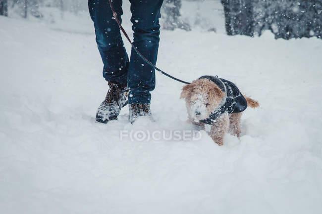 Зору людини при ходьбі в сніг з Пудель щенки на повідку — стокове фото