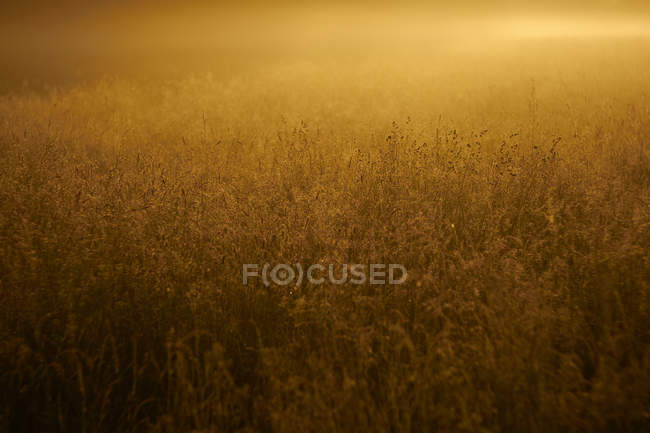 Wild meadow with green grass — Stock Photo