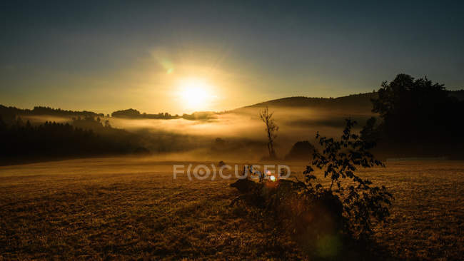 Agricultural field in morning sunshine — стокове фото