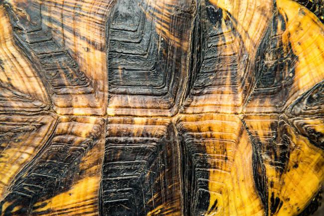 Крупним планом текстури панцир черепахи — стокове фото