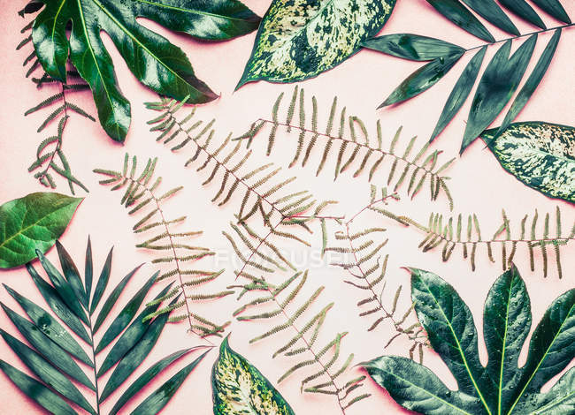 Tropical leaves composition — Stock Photo