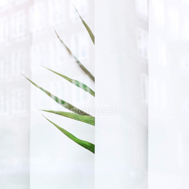 Hojas de Palmera tropical a través de listones blanco blanco - foto de stock