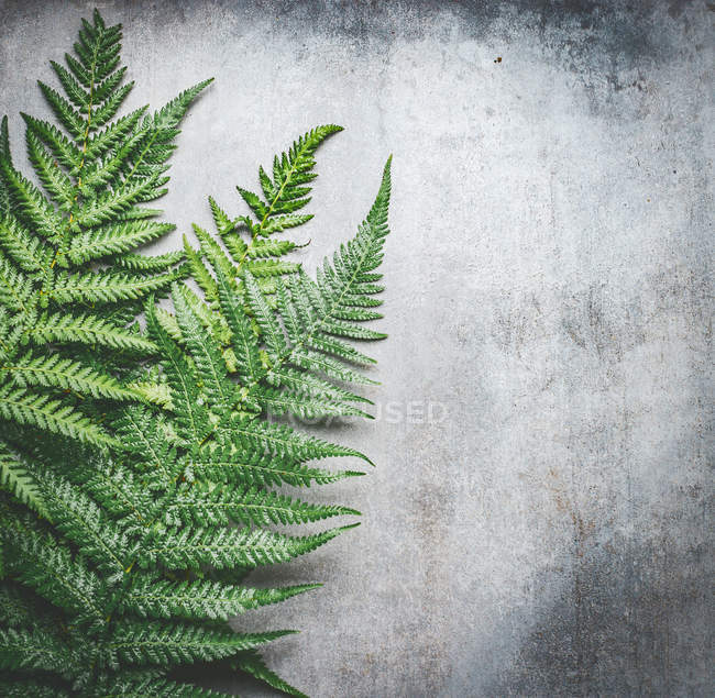 Forest fern leaves — Stock Photo