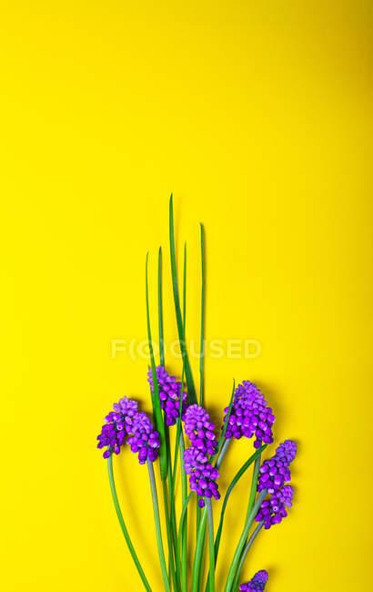 Fleurs de printemps sur jaune — Photo de stock