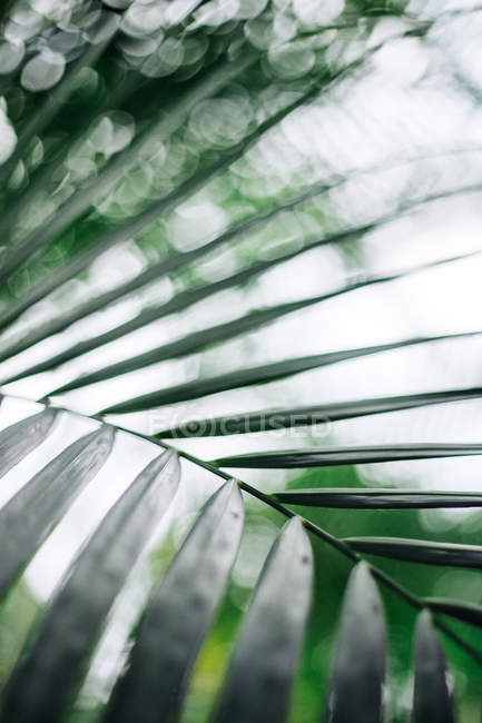Green exotic tropical tree leaves, close up — Stock Photo