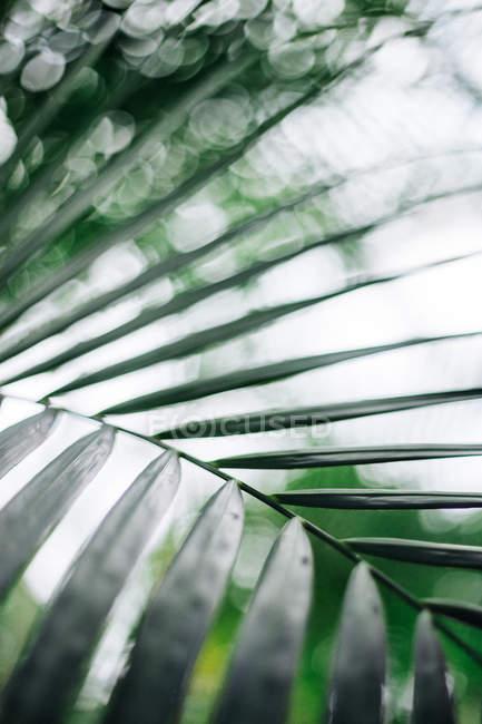 Grüne exotischen tropischen Baum Blätter, Nahaufnahme — Stockfoto
