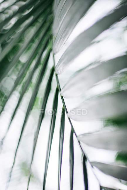 Exotic palm plant leaf — Stock Photo