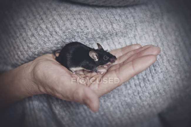 Maus in Menschenhand — Stockfoto