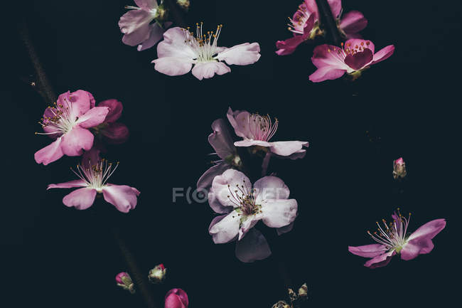 Colorful blooming flowers — Stock Photo