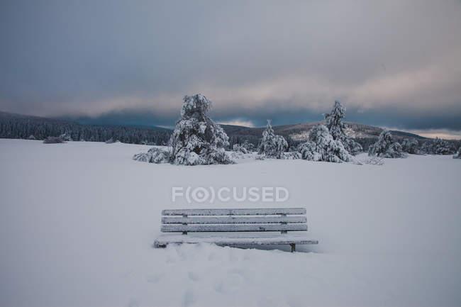 Дикие зимний лес покрытые снегом — стоковое фото