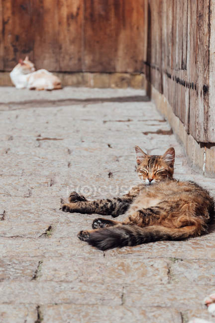 Striped cat lying on pavement — Stock Photo
