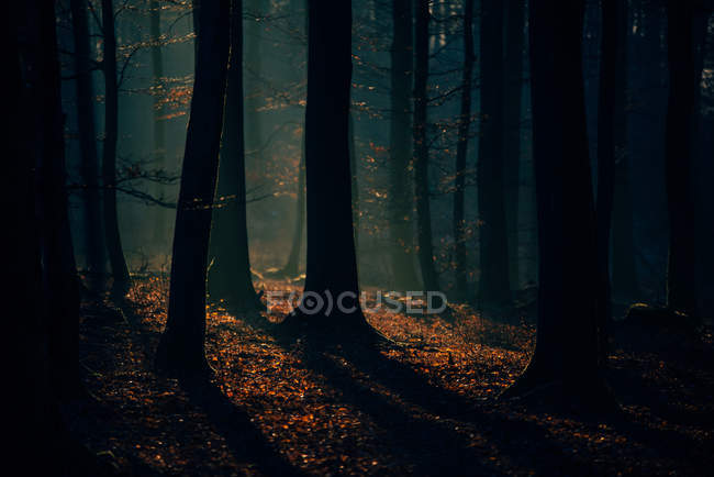Sun lighting through the trees — Stock Photo