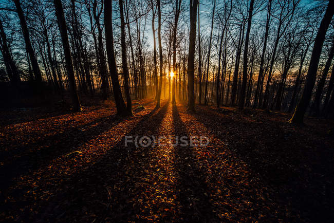 Sun setting behind the trees — Stock Photo