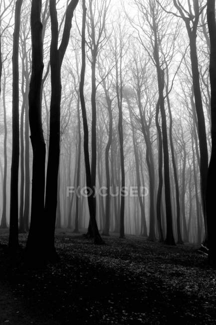 Forest at autumn time — Stock Photo
