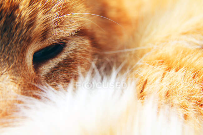 Ginger cat face — Stock Photo