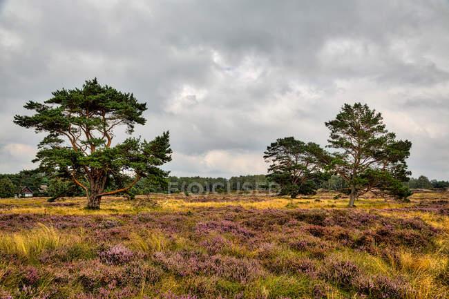 Луг и лес вид на фоне — стоковое фото