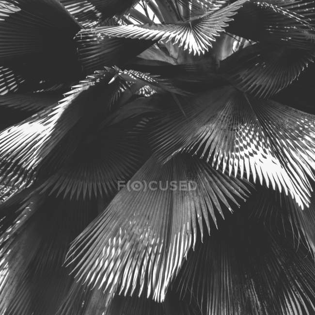 Exotic plant leaves with shadows — Stock Photo