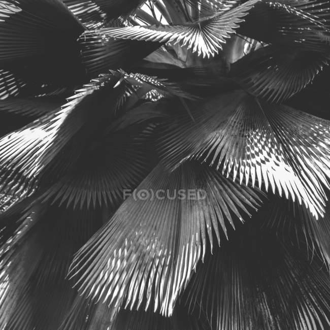 Exotische Pflanze Blätter mit Schatten — Stockfoto