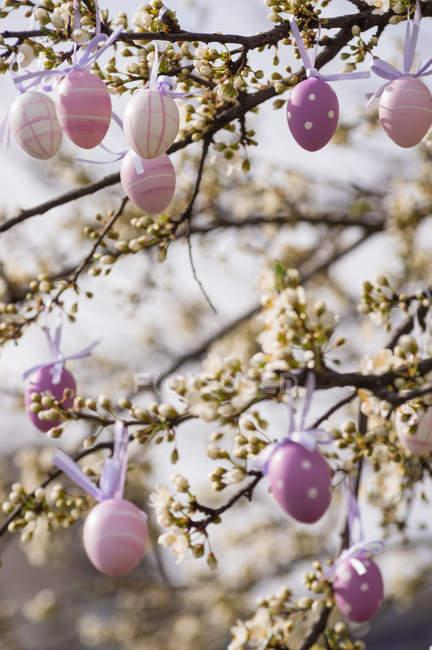 Пурпурний колір великодні яйця висить на дереві — стокове фото