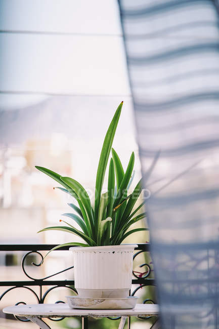 Green potted plant at the balcony — Stock Photo