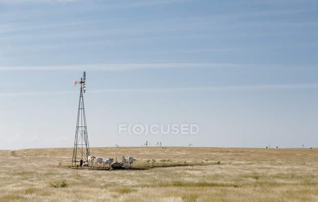 Возобновляемые мельница в области сельской местности — стоковое фото