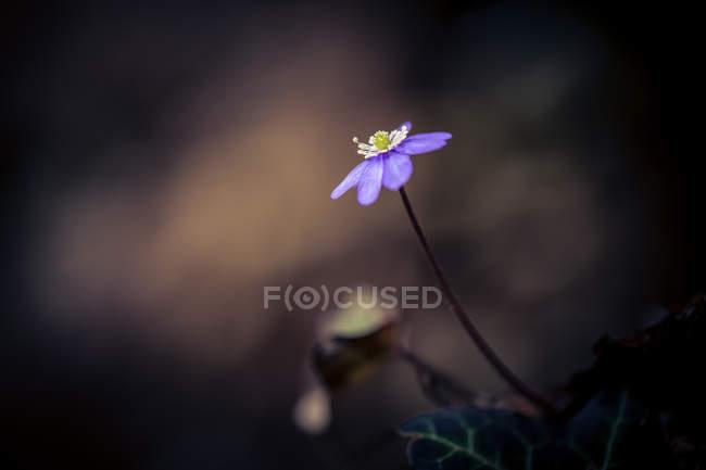 Полевые цветы, цветение на открытом воздухе — стоковое фото