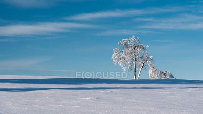 Bäume auf schneebedeckten Feld im sonnigen Tag — Stockfoto