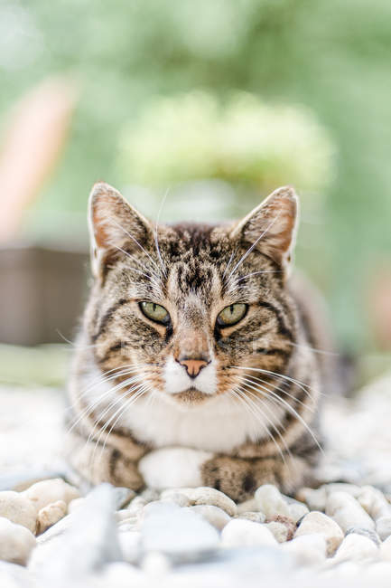 Cat sitting on pebbles — Stock Photo