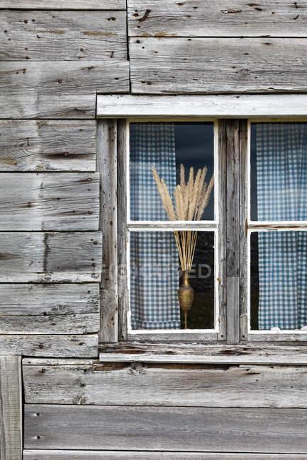 Ventana vista y trigo bouquet - foto de stock